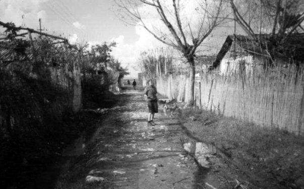 Midis barrakave - Drita Skrame 1992