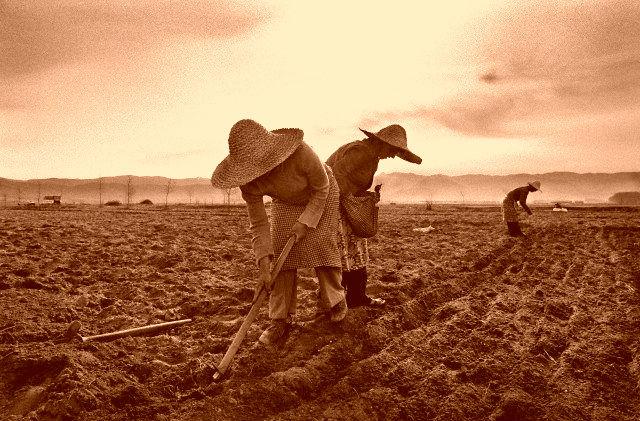 Punë bujqësie