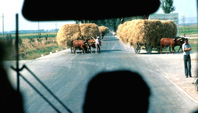 Qerret... Savër 1984 (Foto Ferdinando Scianna)