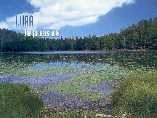Liqeni i Luleve Lurë