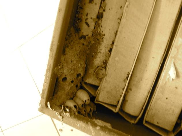 Dosjet... nga Arkivi i M.P.B. (foto K. Dervishi)
