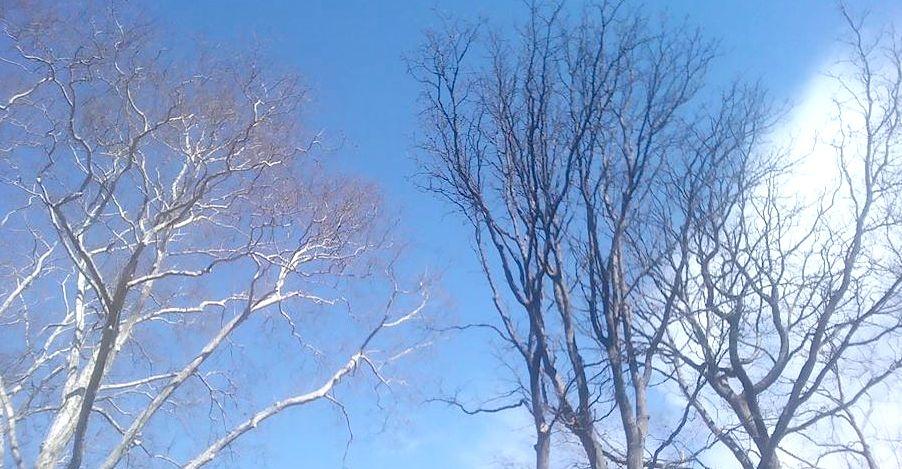 Pemët zhgarravina qiellit hapërda...