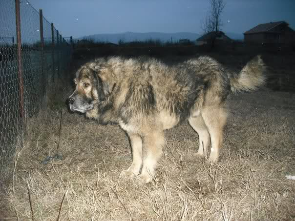 Qeni i Sharrit - Mollosi ilir