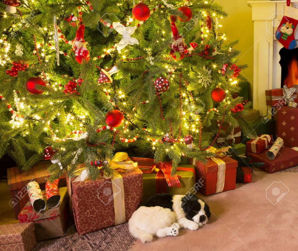 Nën pemën e Krishtlindjeve