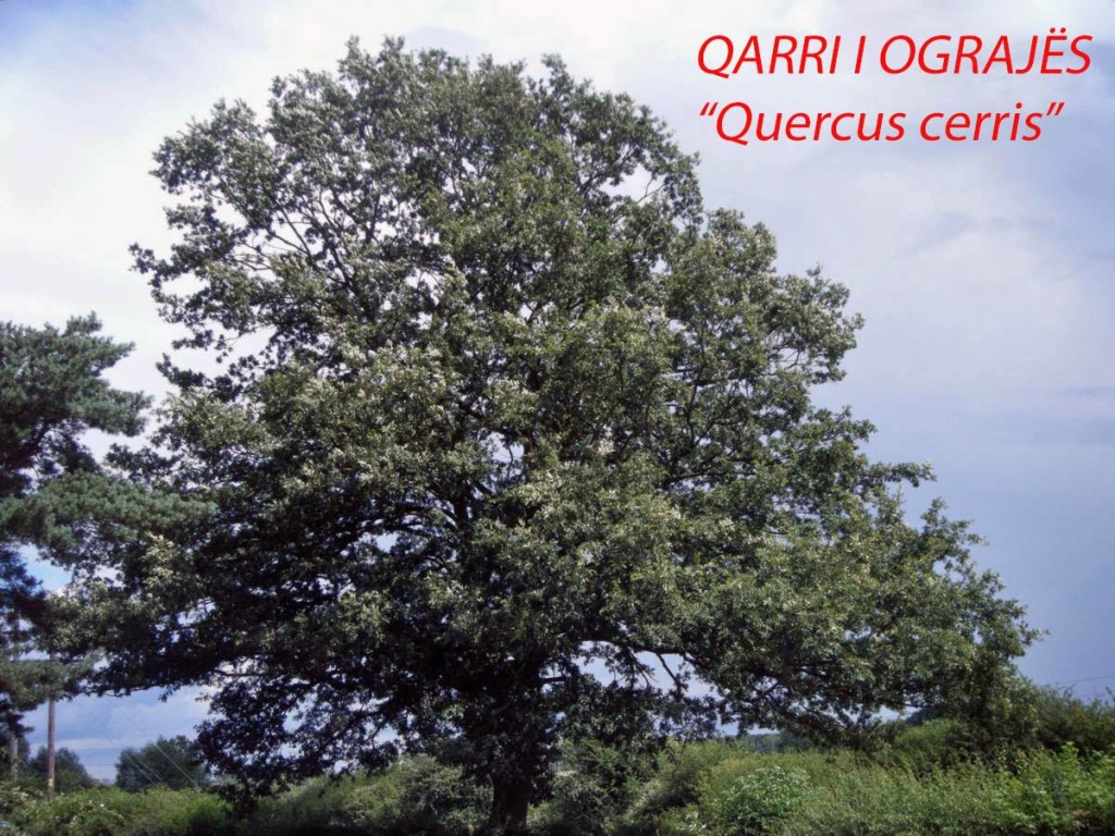Qarri i Ograjes