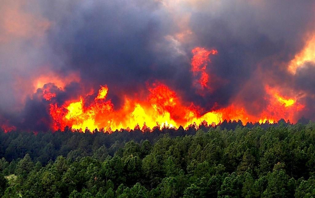 Me mijra hektarë pyje të djegura vetëm në pak ditë...