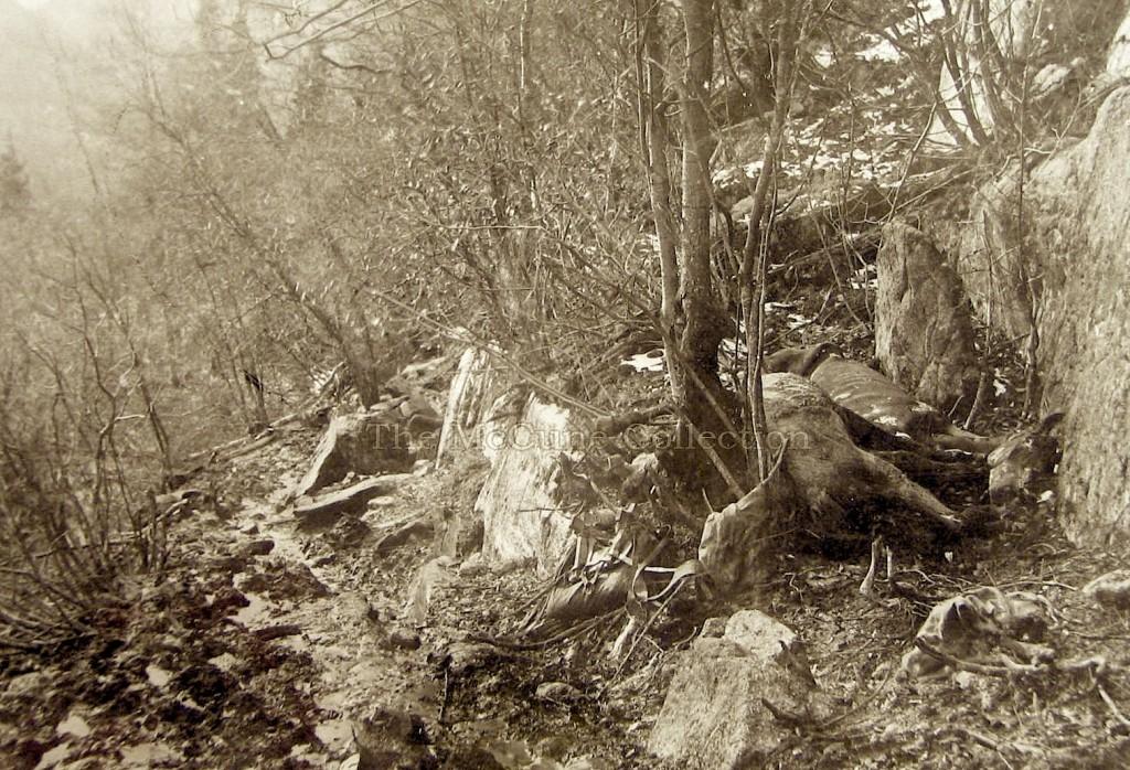 Dead Horse Trail. Mijra kuaj (thonë mbi 90 000) ngordhën në këtë malore në stërmundim të transportit të pajisjeve të kërkuesve të arit.