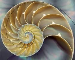 Fibonacci dhe Trajta e Kermillit