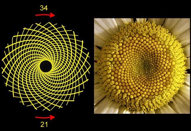 Lulja e Diellit dhe Parimi i Numrit te ajo
