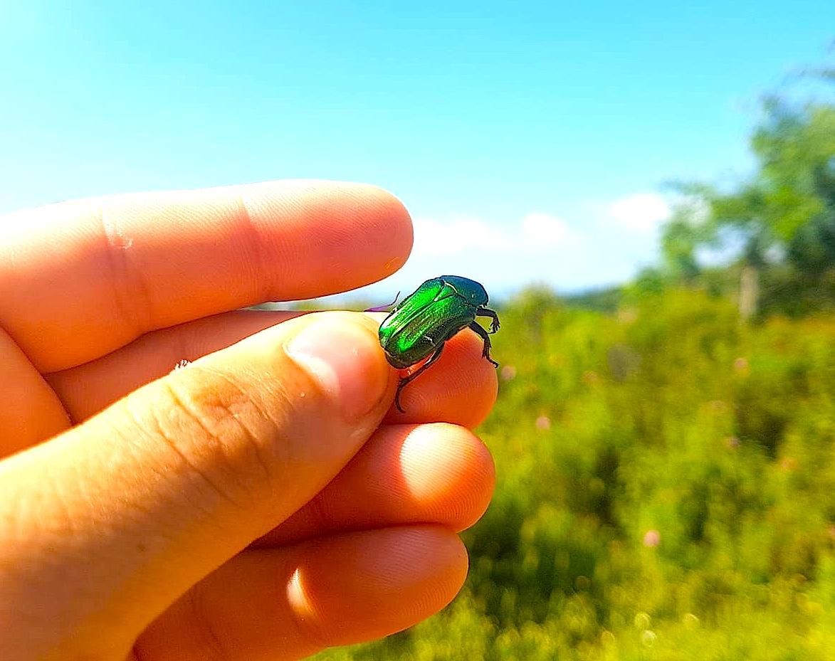 Një insekt që shëndrit